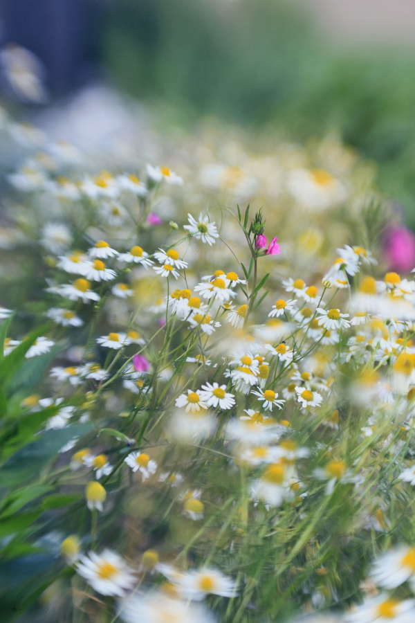 Floral Splendor in the meadow