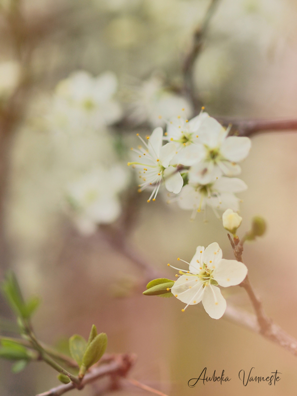 Love for blossoms