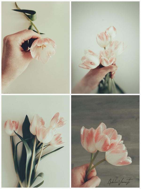It's all about a tulip