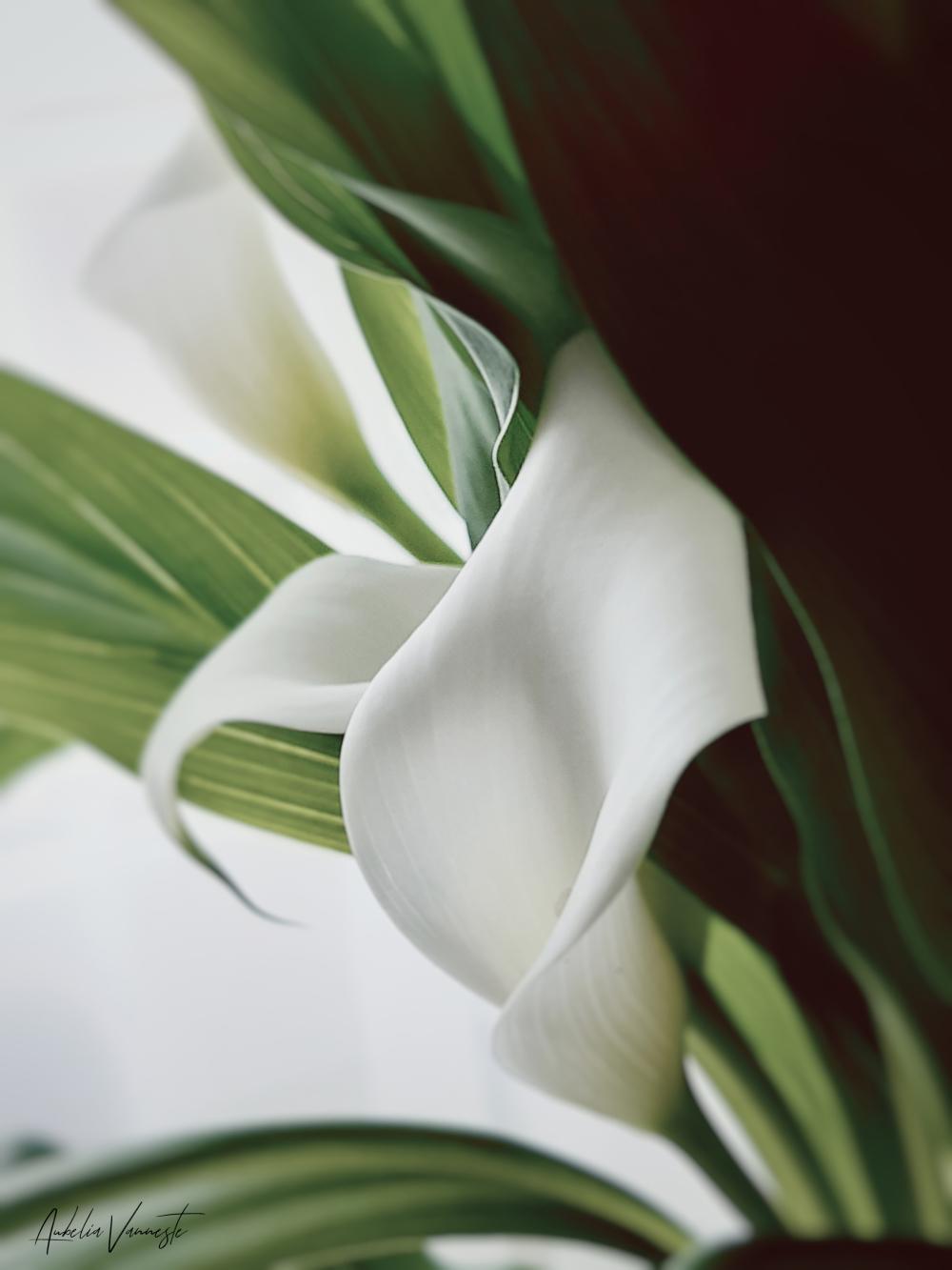 Cette belle fleur ... Pour ma mère