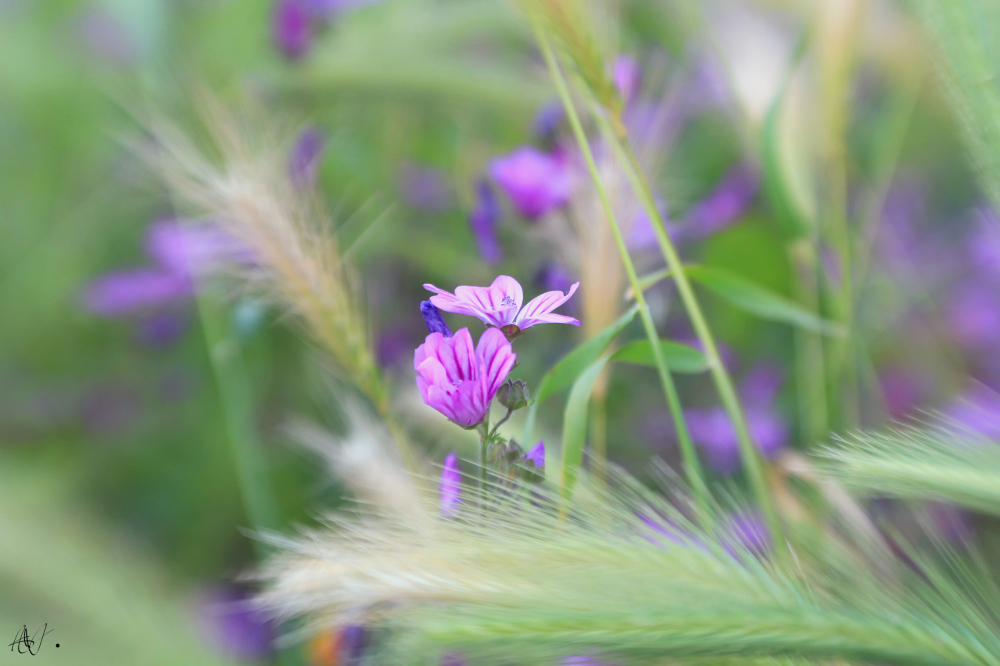 Among the grasses