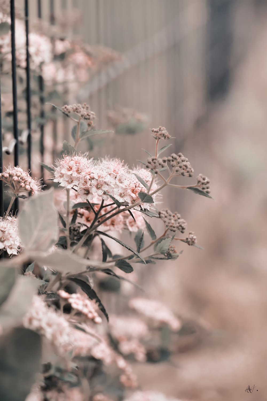 Small, beautiful flowers