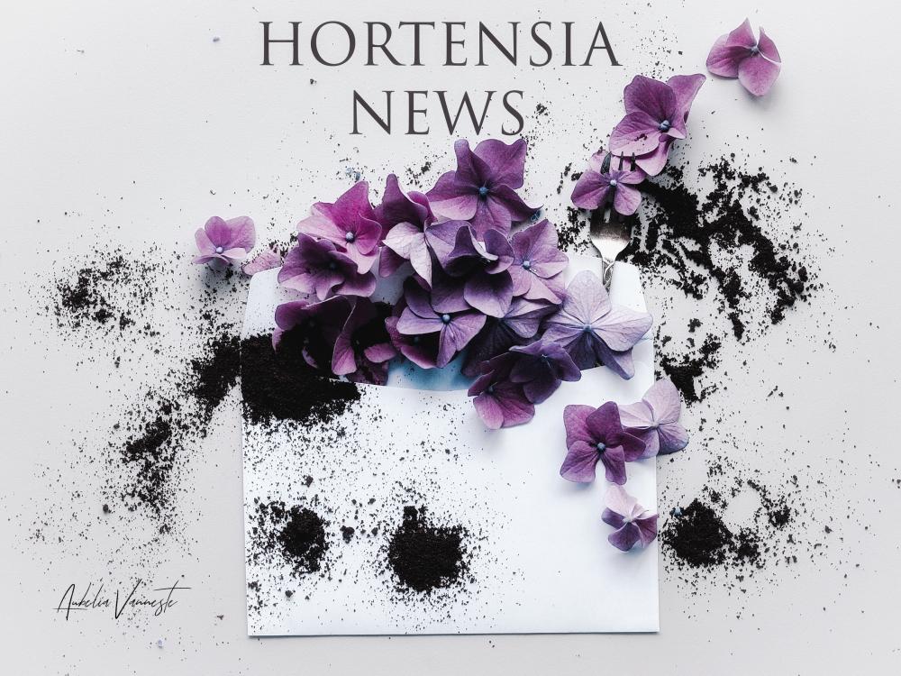 Hortensia news