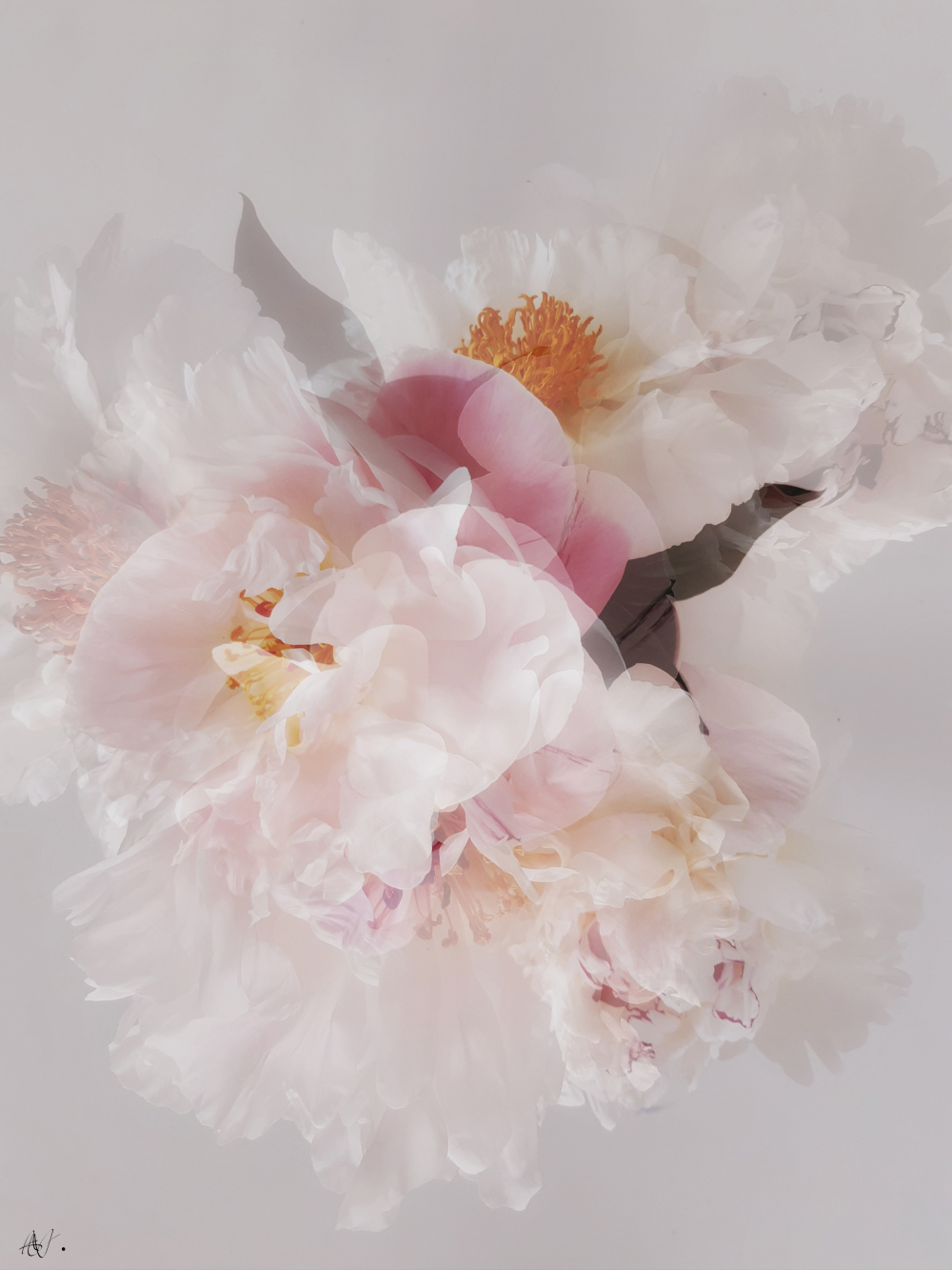 Art with peonies