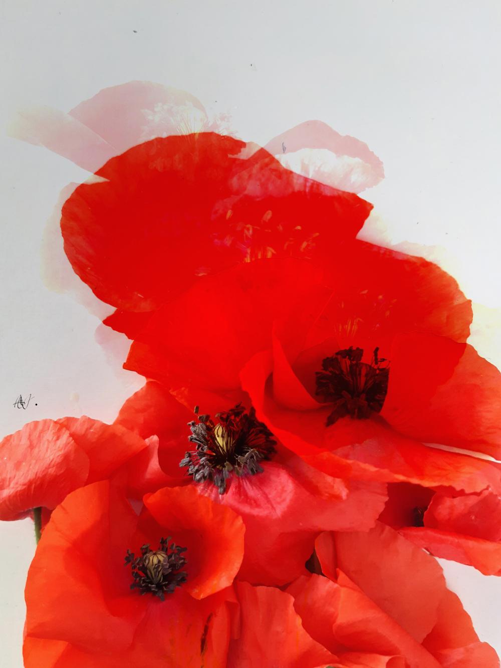 Ephemeral flowers