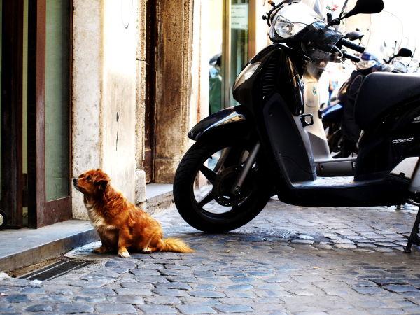 Dog waiting outside store