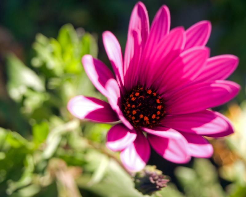 flor lila II