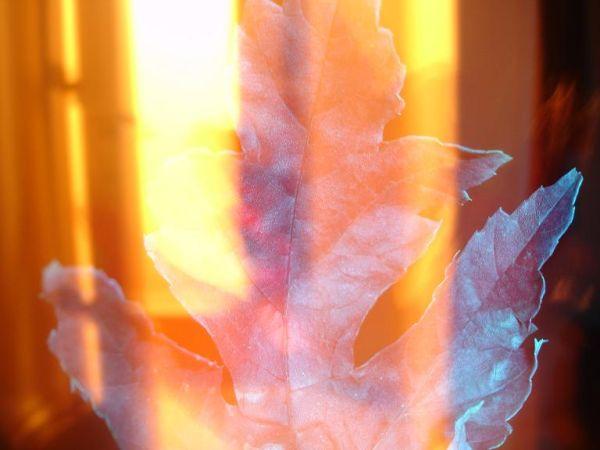 art photo of leaf