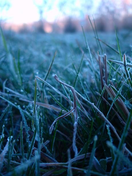 outdoor frost image