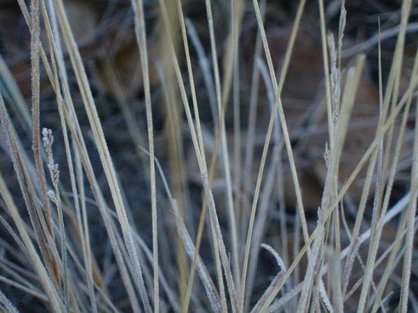 frost grass outside art photo