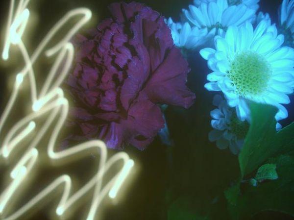 flower light indoor artsy vase photo