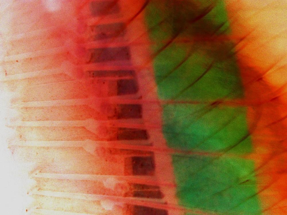 negative mutiple exposure of piano strings