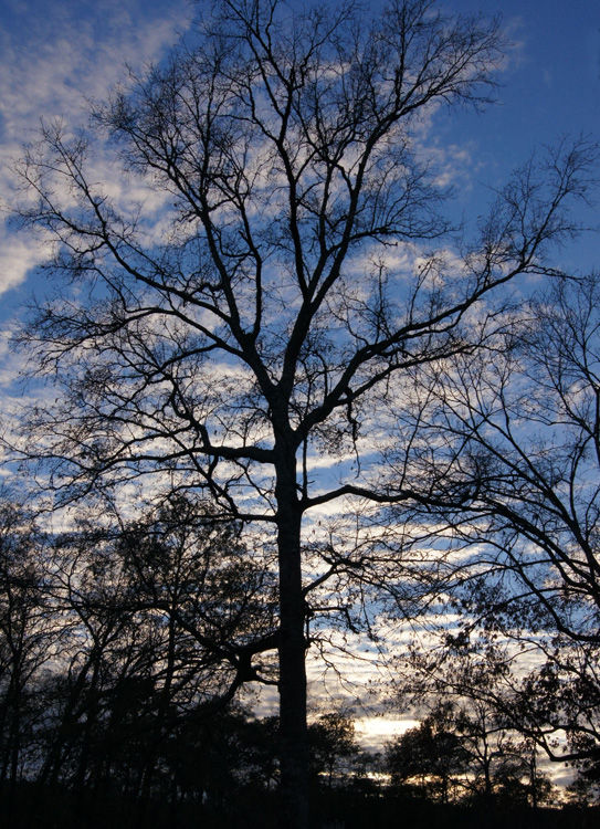 Tree & Sky - Oh my