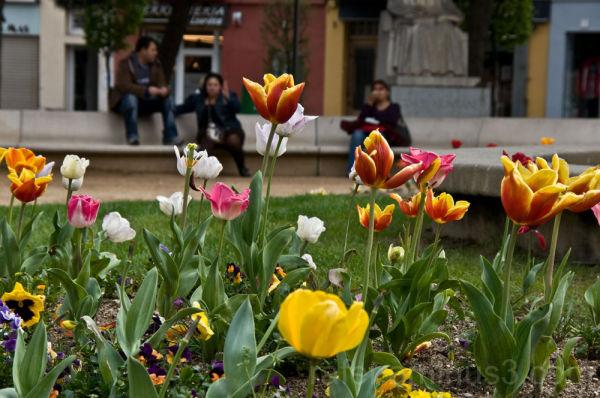 Flores en la ciudad