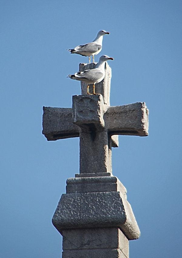 Creu de quatre braços i dues gavines