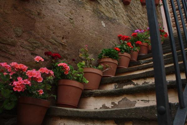 Escala florejada