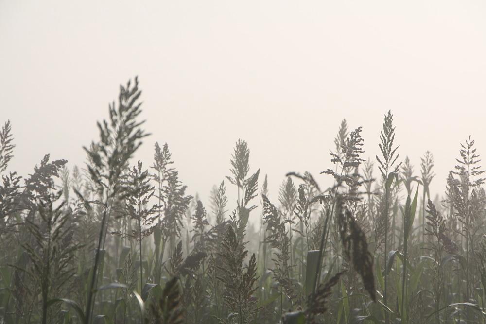 Boira (fog)