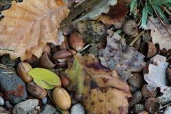 Tardor al terra (Autumn to ground)