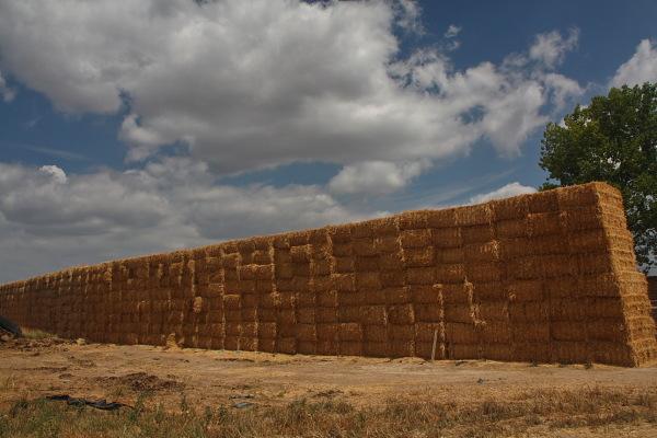 El Mur (the wall) 1/4