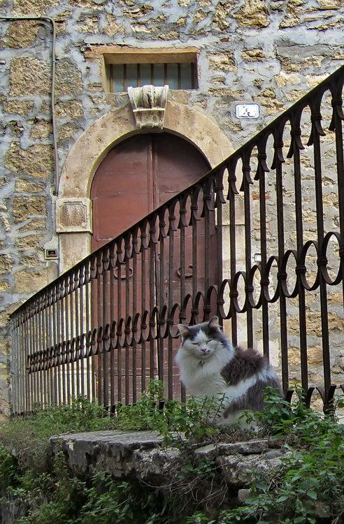 Gat, barana i porta