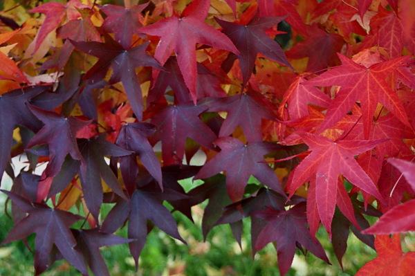 Colors de tardor  2