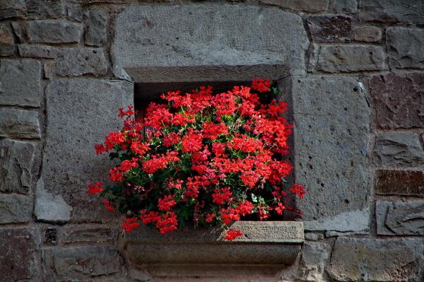 La finestra del gerani. (Per la MPilar)