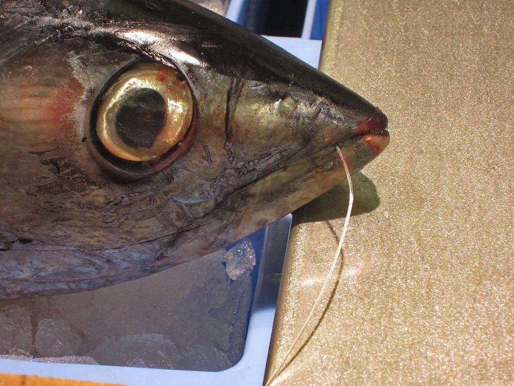 Peix pescat !