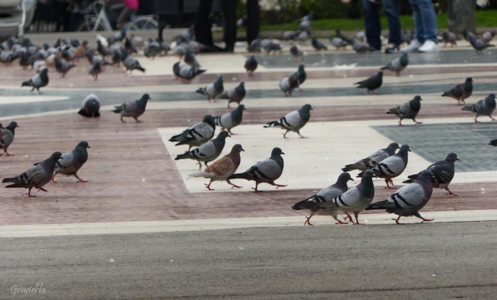 Coloms a Plaça Catalunya