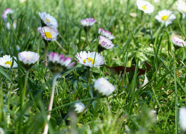 Flors al prat