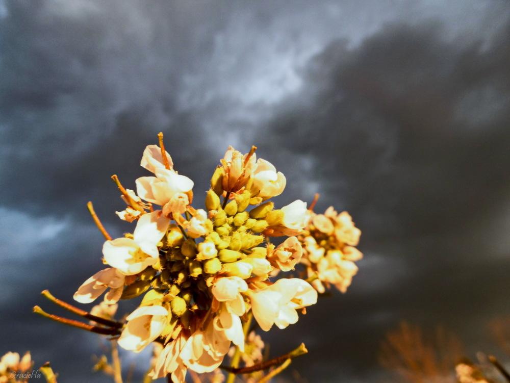 Núvols i ... matablat  (2/2)