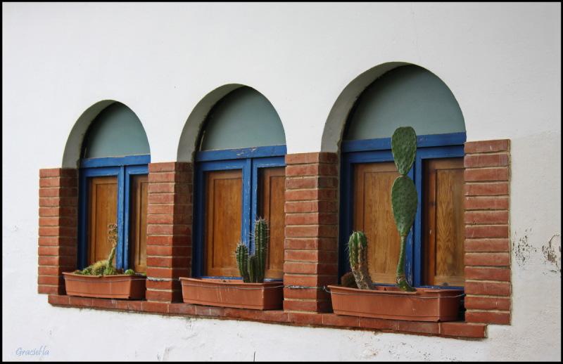 Tres finestres amb cactus