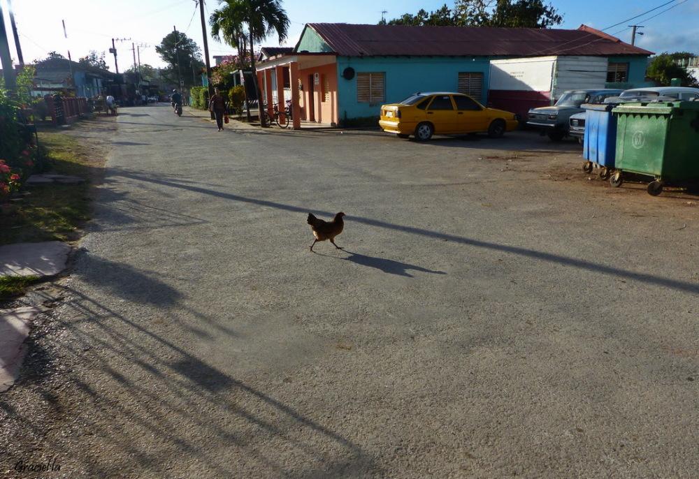 Carrers de Cuba #3  Viñales