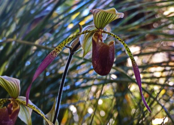 Exhibició d'orquídies  #1