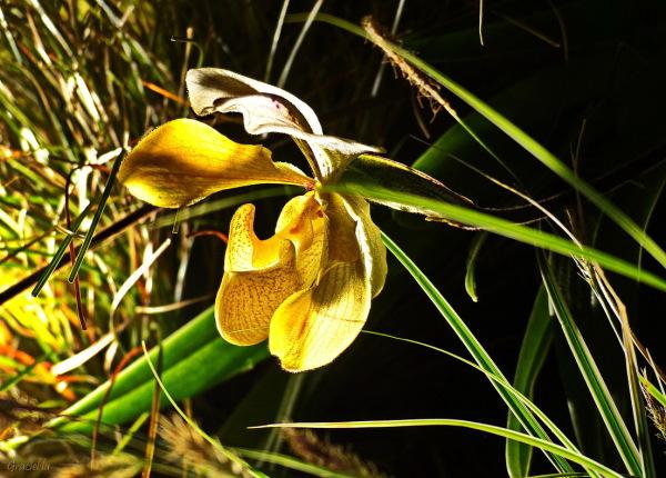 Exhibició d'orquídies  #2