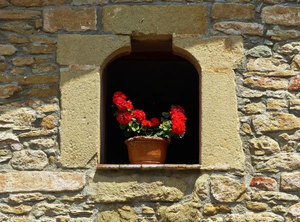Flors a l'ampit.