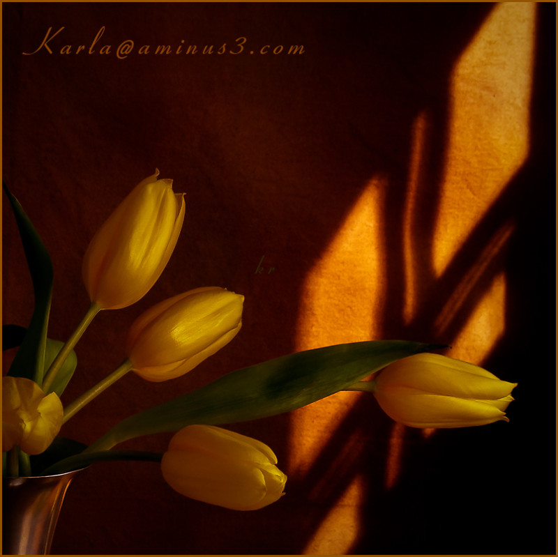 still-life, flower, tulip, gold