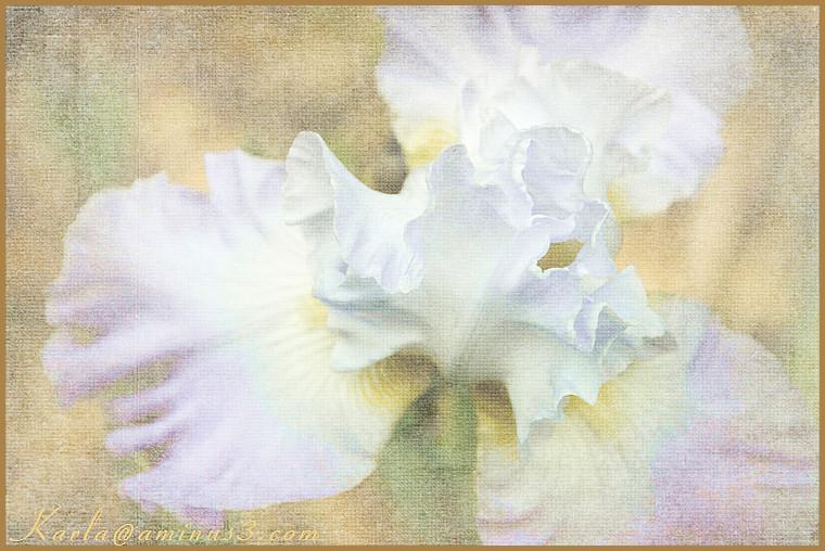 flower iris texture pastel