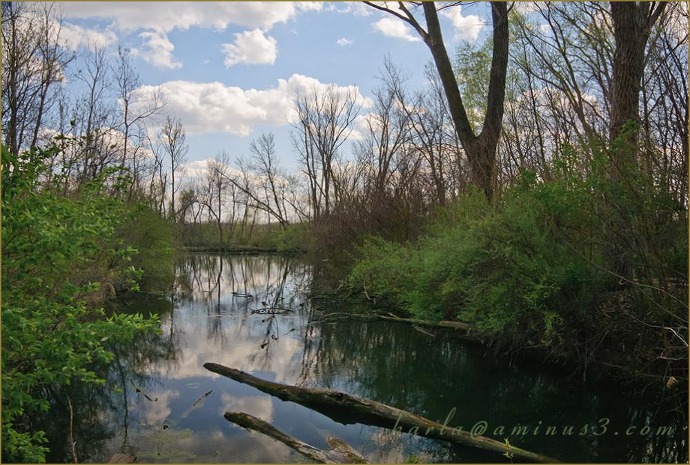 wetland, sanctuary, Heron-Haven