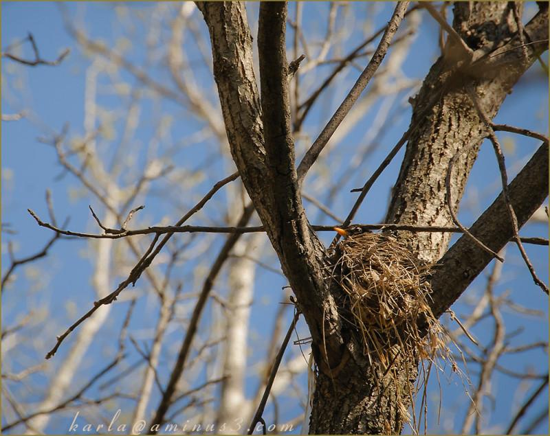 wetland, sanctuary, Heron-Haven, robin-nest