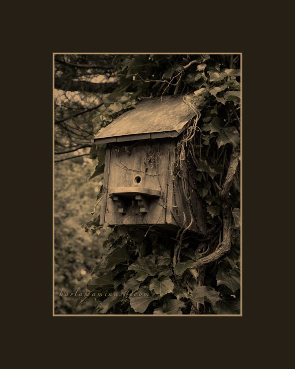 bird house in a tree, sepia toning