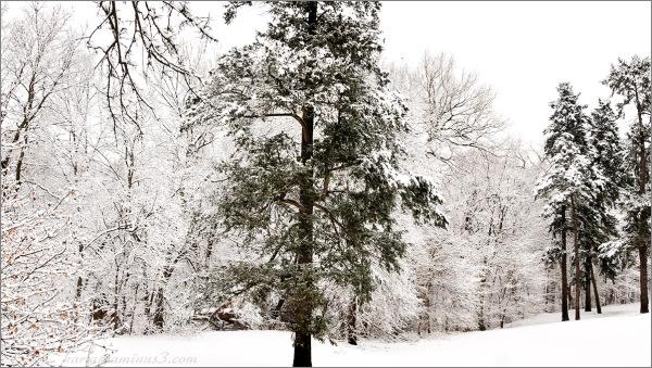 Elmwood Park's snowy day