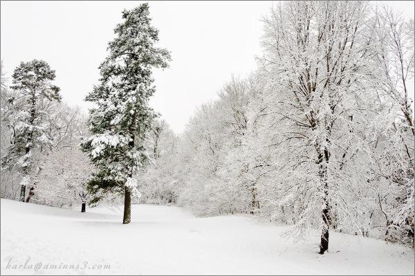 Elmwood Park's snowy day 2