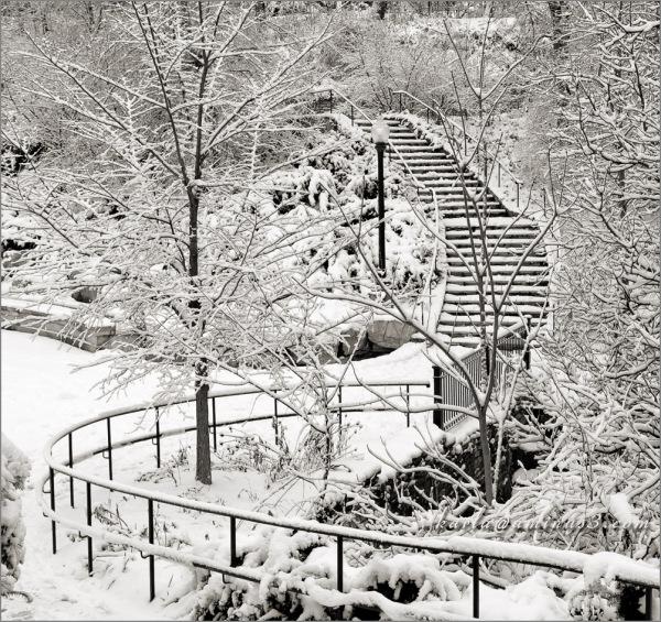 Elmwood Park's snowy day 3