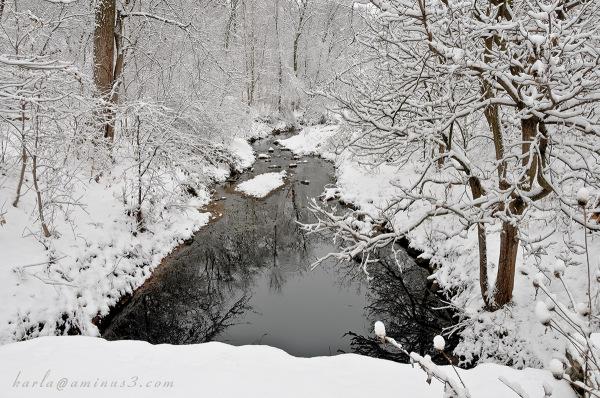 Elmwood Park's snowy day    the creek
