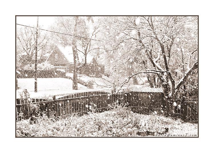 snowy day in an Omaha neighborhood