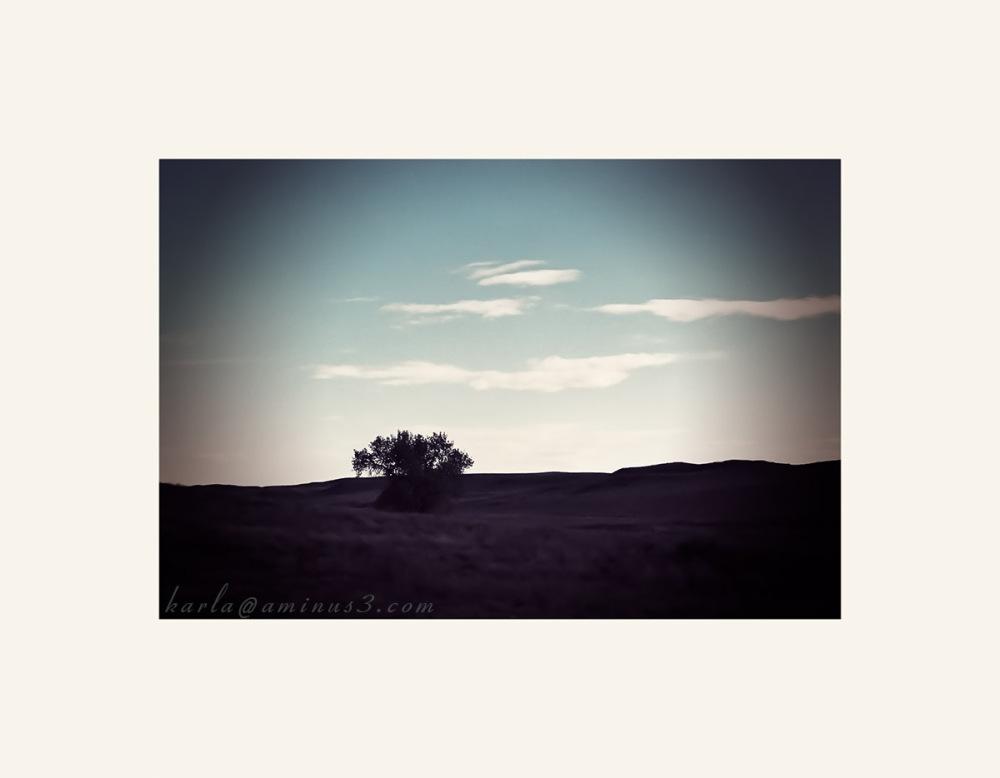 lone tree against sunset in western Nebraska