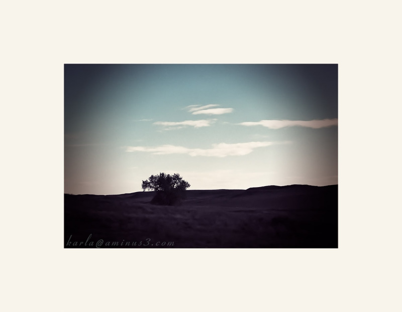 lone tree against sunset in western Nebraska