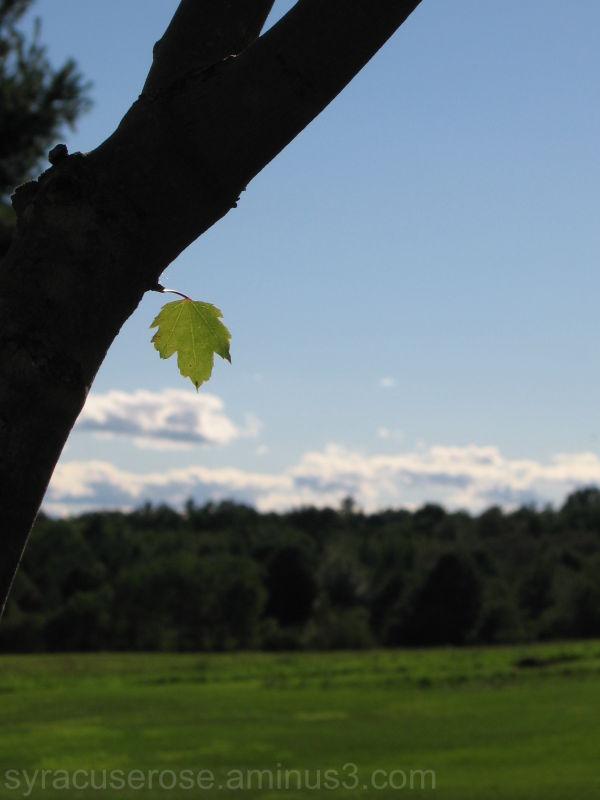 Little Leaf, Big World