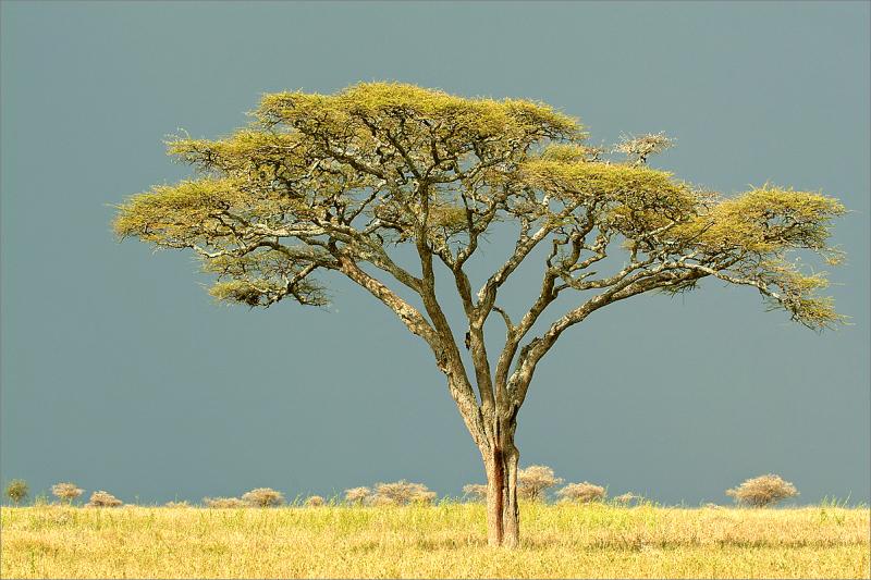 Tanzania 2004.