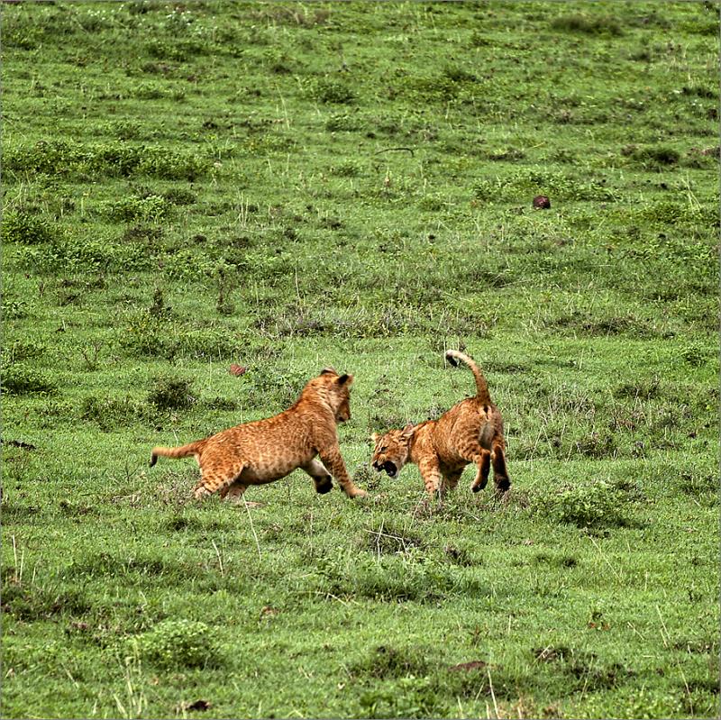 Tanzania 2004